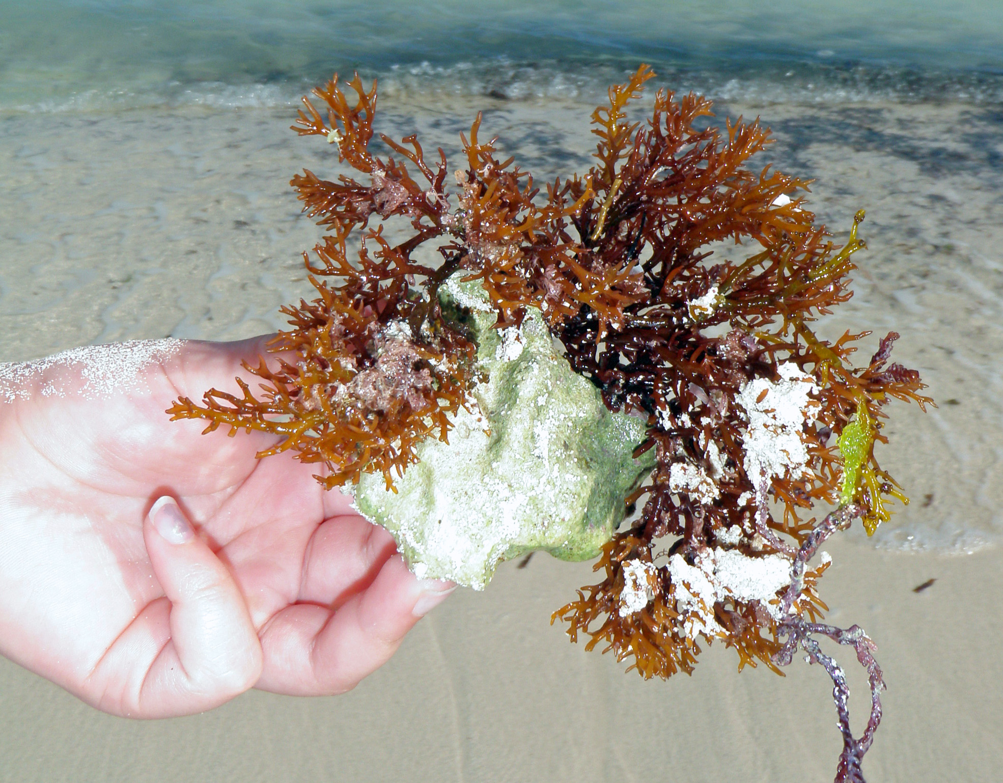 2010 Eco-Blogging Garden Adventure in Mexico – You Are Killing the Coral – STOP USING CHEMICAL FERTILIZERS!