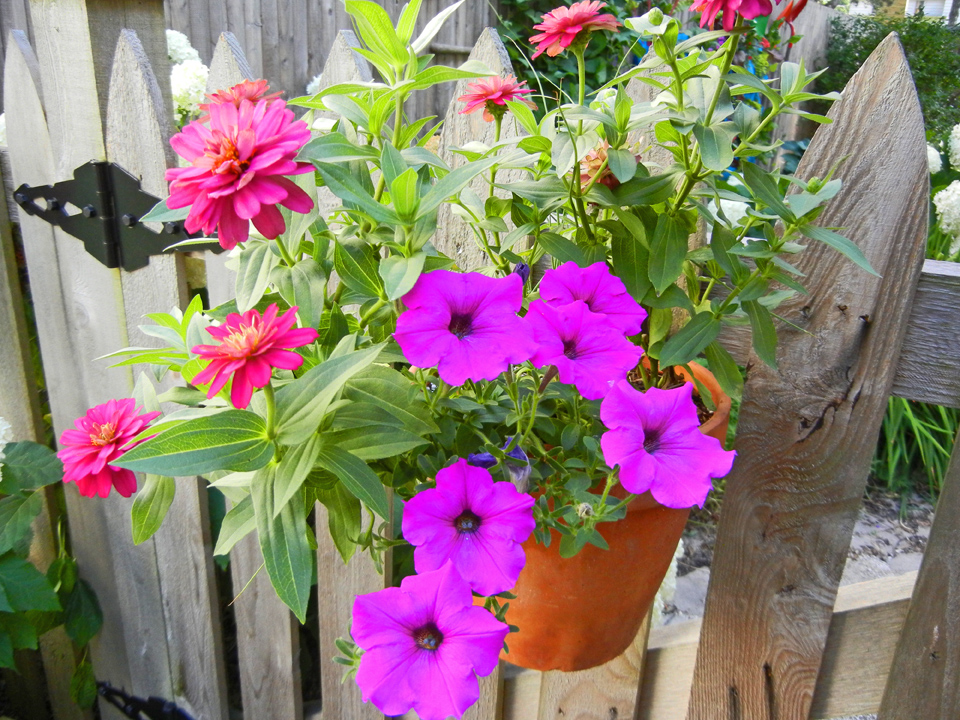 Container Garden Dry Out – Secret Tips To Save Plants and Save Money