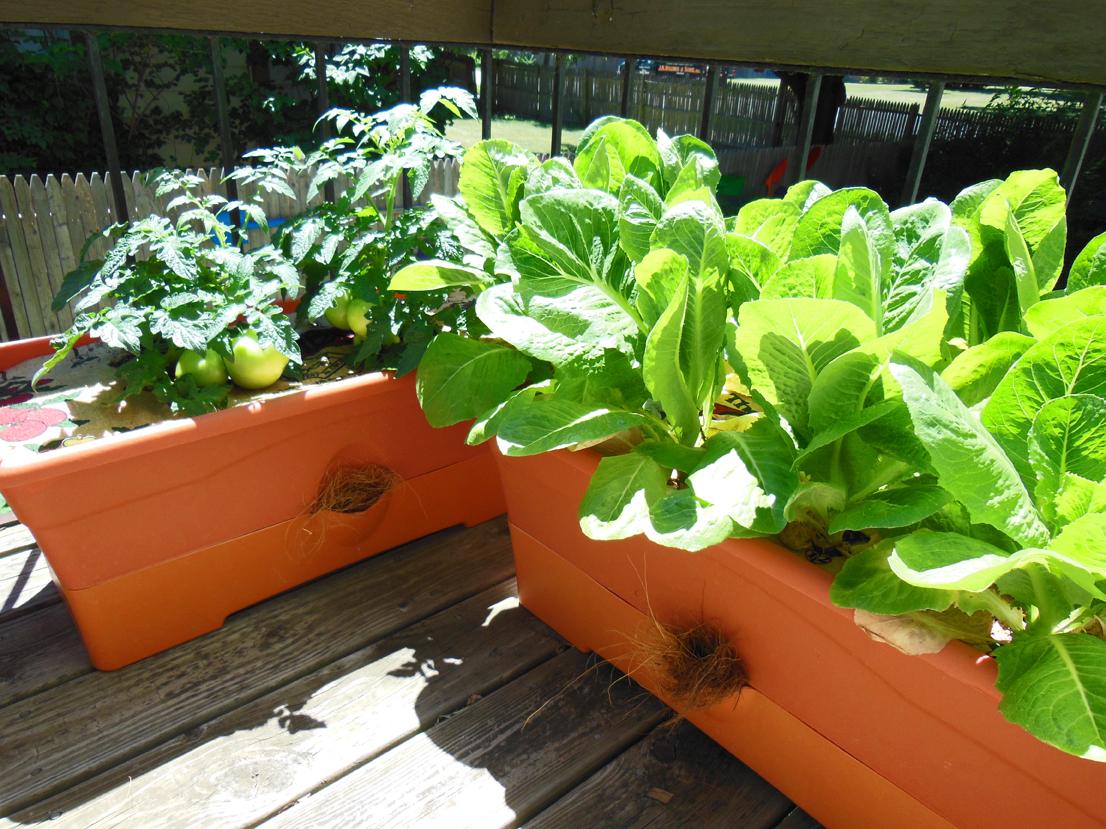 Perfect GrowBox Planters Growing On Shawna Coronadou0027s Balcony Home Design Ideas