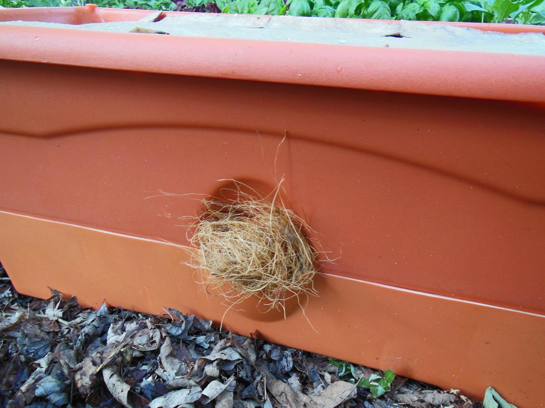 Inside urban green: garden patch grow box.