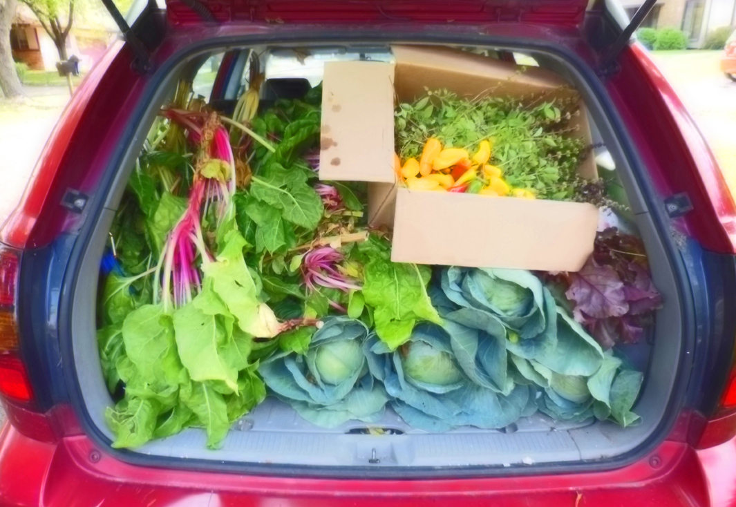 Fresh vegetables from the front lawn veggie garden for a food pantry delivery.