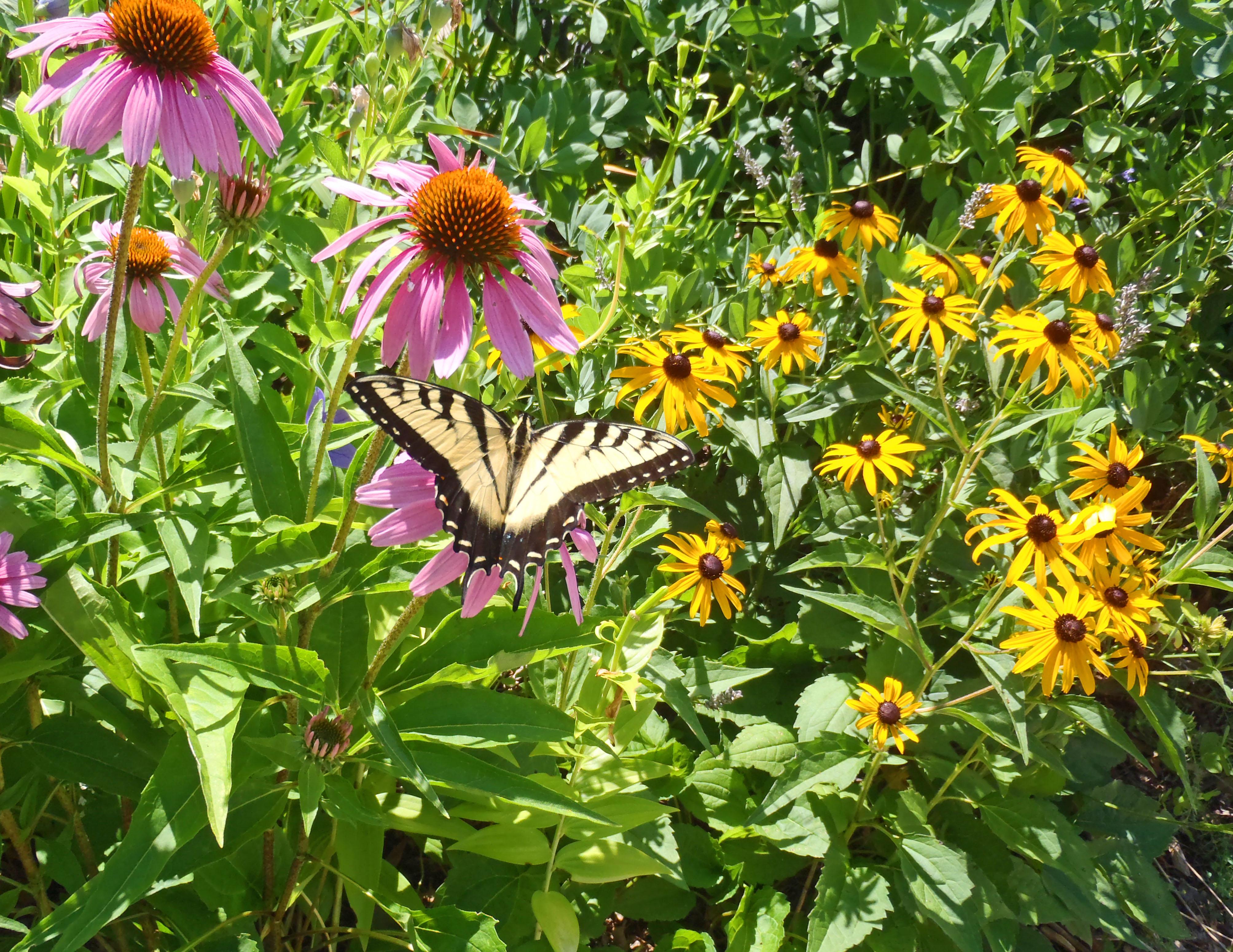 Xeriscape Gardening – A Drought Tolerant Water Saving Advantage