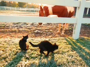 Horse and Kittens