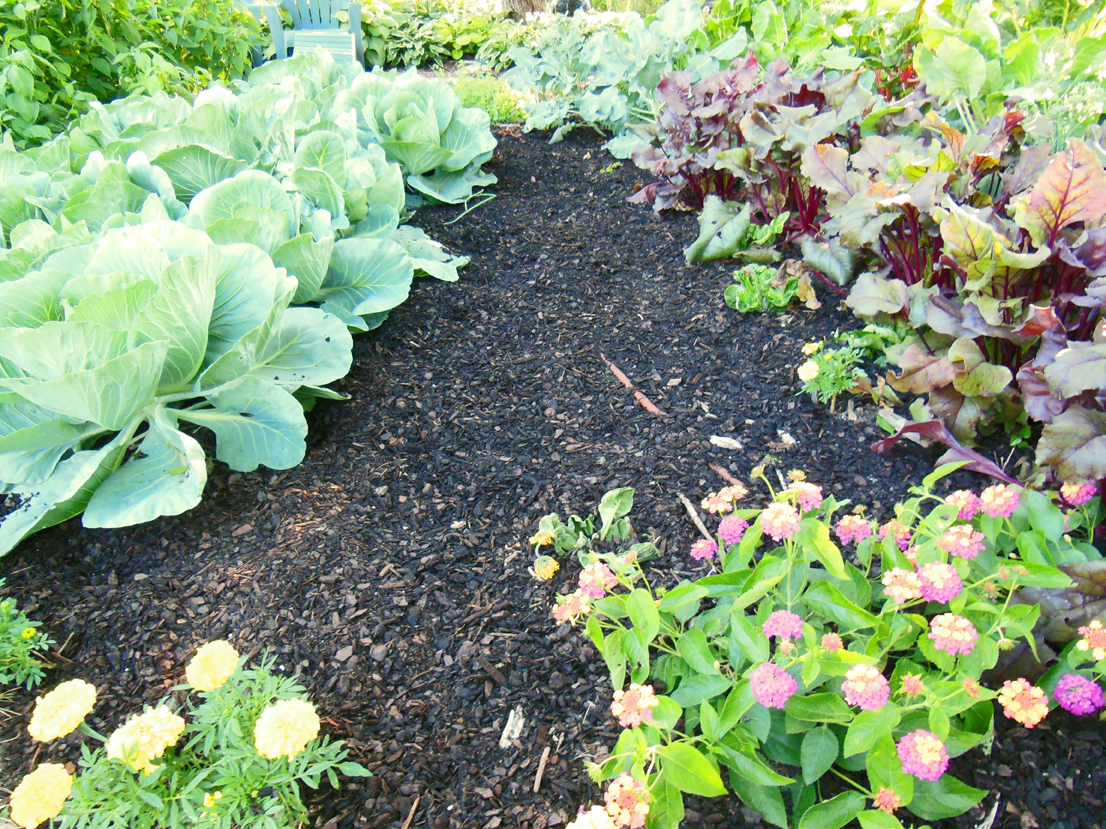 how to garden in fall with some bitchin 39 mulch shawna