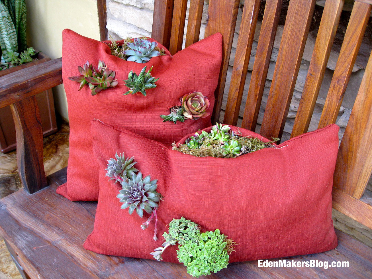 Living-Tapestry-Succulent-Pillows-Shirley-Bovshow