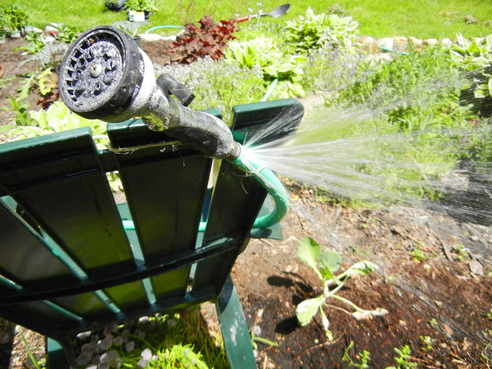 watering garden with ripped hose