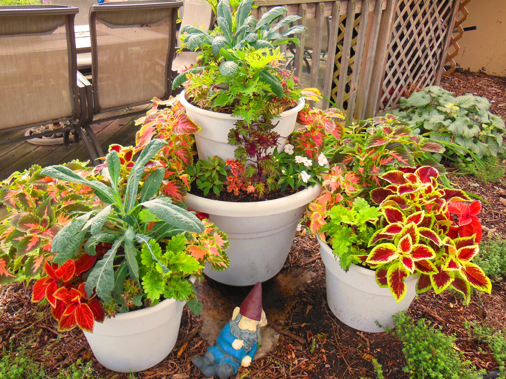 Combining kale and coleus in a stacked tower container for Ornamental vegetable plants