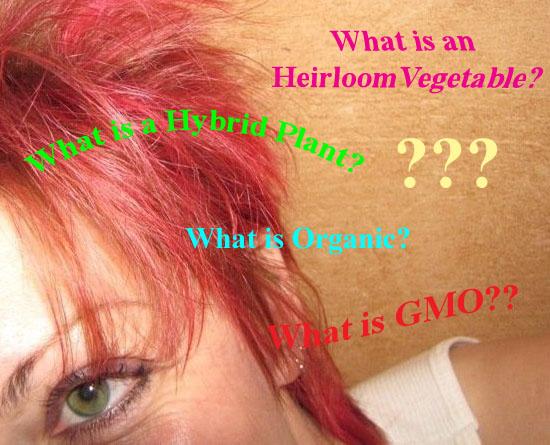 Heidi Heinsen Goodin questions