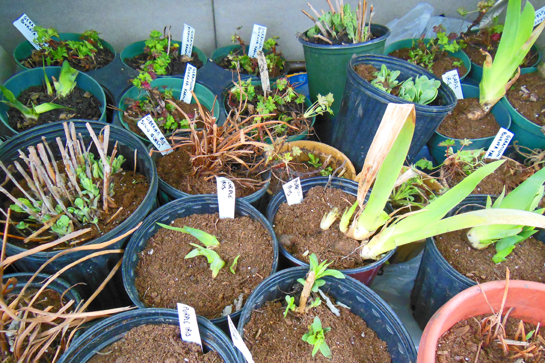 Make Homemade Planting Tags From A Milk Carton – Reduce, Reuse, Recycle