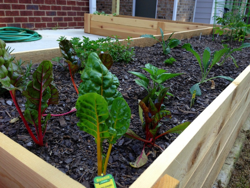 Michael Nolan's raised bed gardens