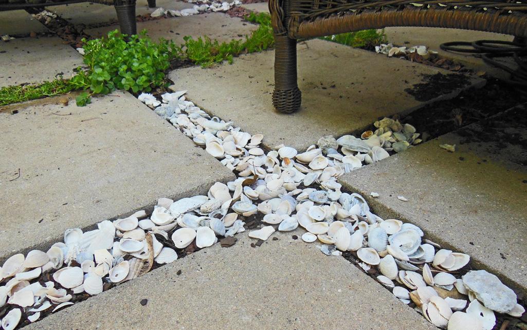 Cocktail Garden Seashells