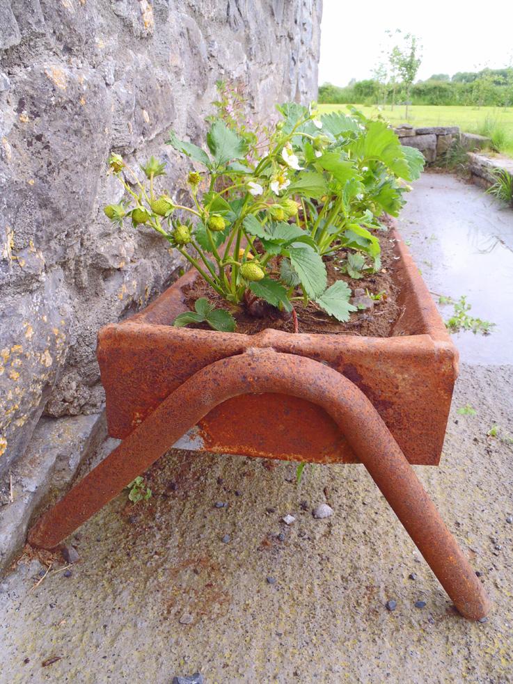 Irish Strawberry Trough Planter
