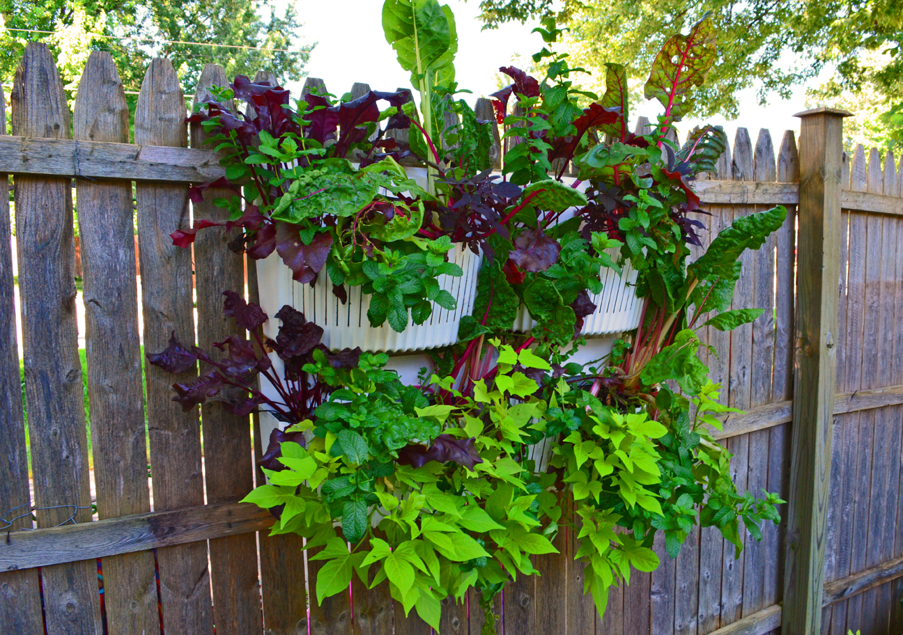 vertical garden planters are easy to install in full shade - Wall Garden