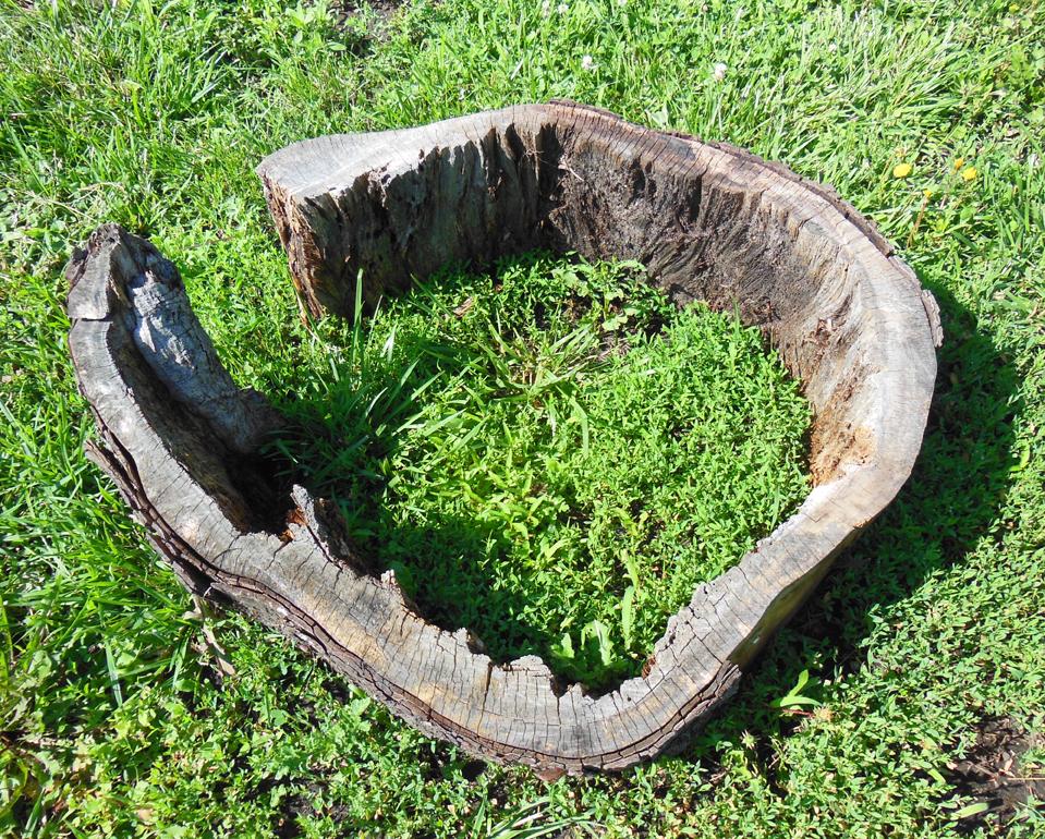 Stump Lettuce Garden Form