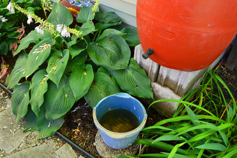 Compost Tea Experiment Rain Water