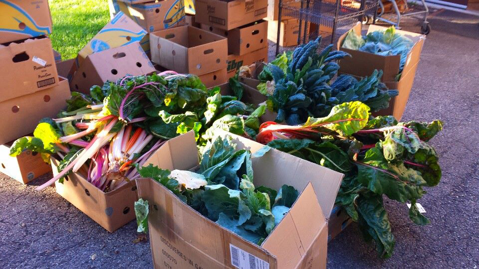 Donate Your Organic Garden Vegetable Harvest To a Food Pantry