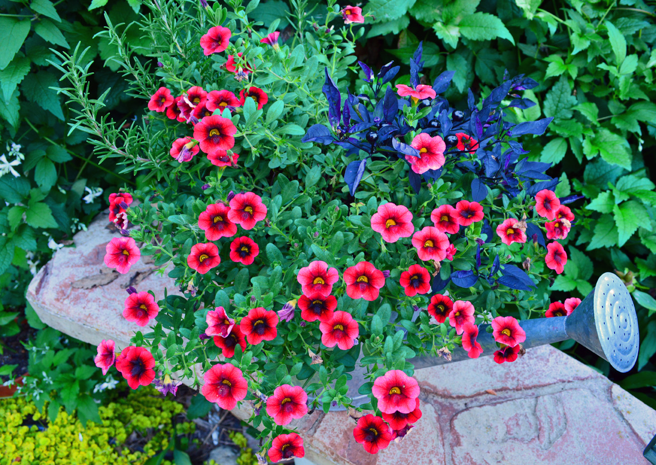 Refresh Your Garden Design And A Proven Winners Plant Give