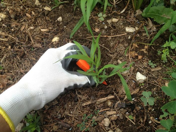 Ringweeder Weeding
