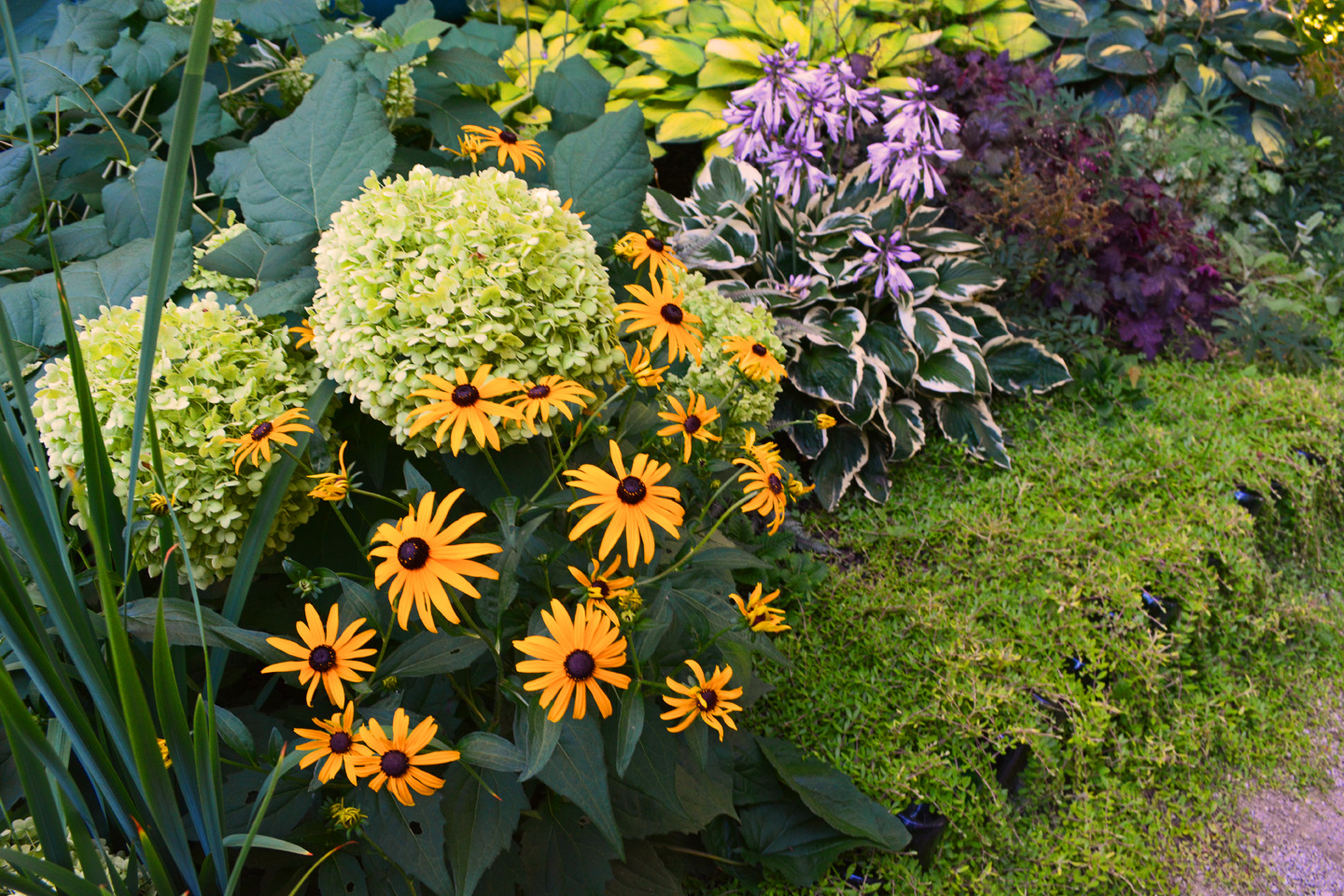 Fantastic Refresh Your Garden Design and A Proven Winners Plant Give-Away  KK67