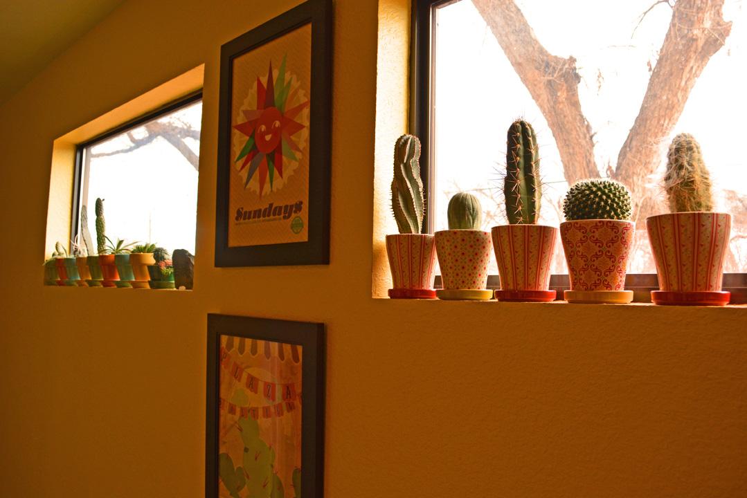 Cactus Houseplant Garden Design Solution