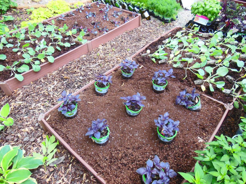 Shade vegetable garden color block planting