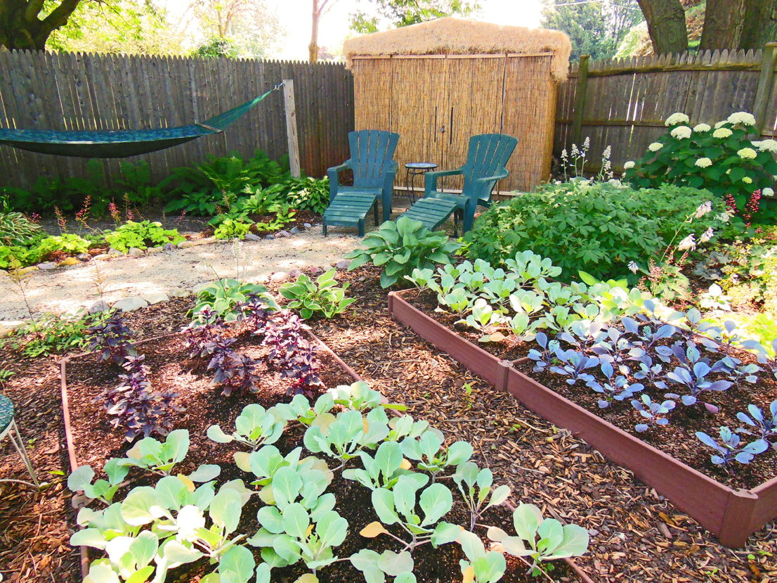 Shade Garden Design Vegetable Colorblock Growing