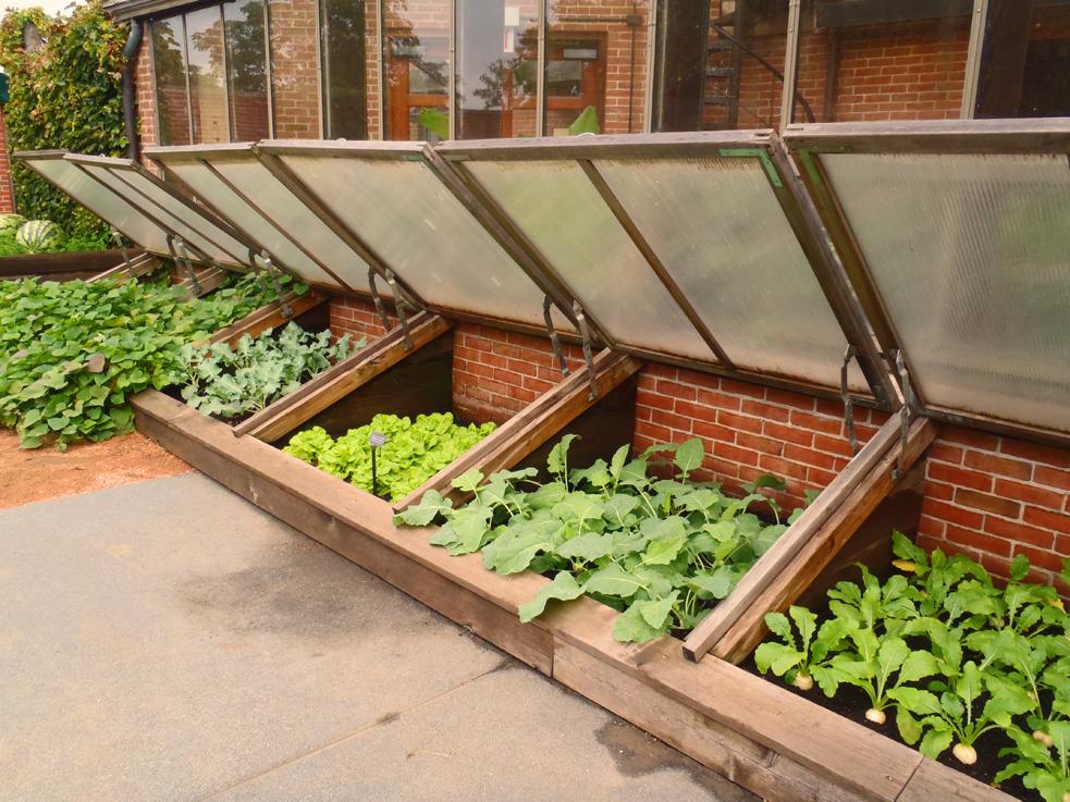Cold Frames To Protect Your Garden - Shawna Coronado