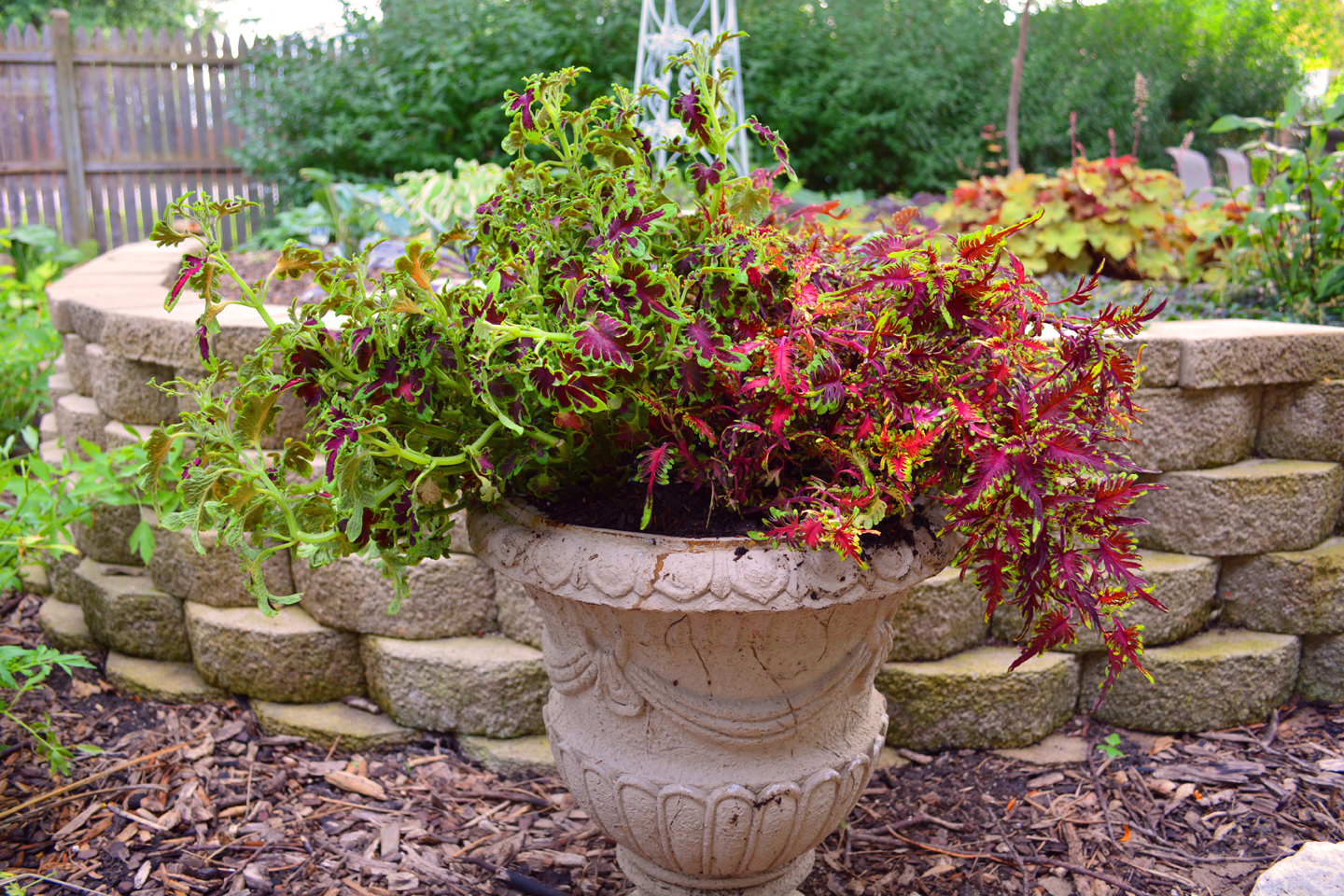 Coleus plant container garden design shawna coronado for Backyard planting designs