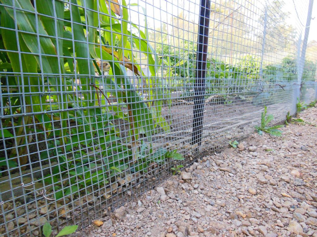 Militant Gardening Fence