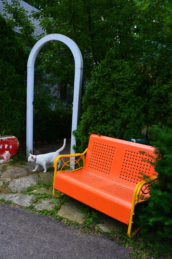 Orange Garden Chair and White Cat
