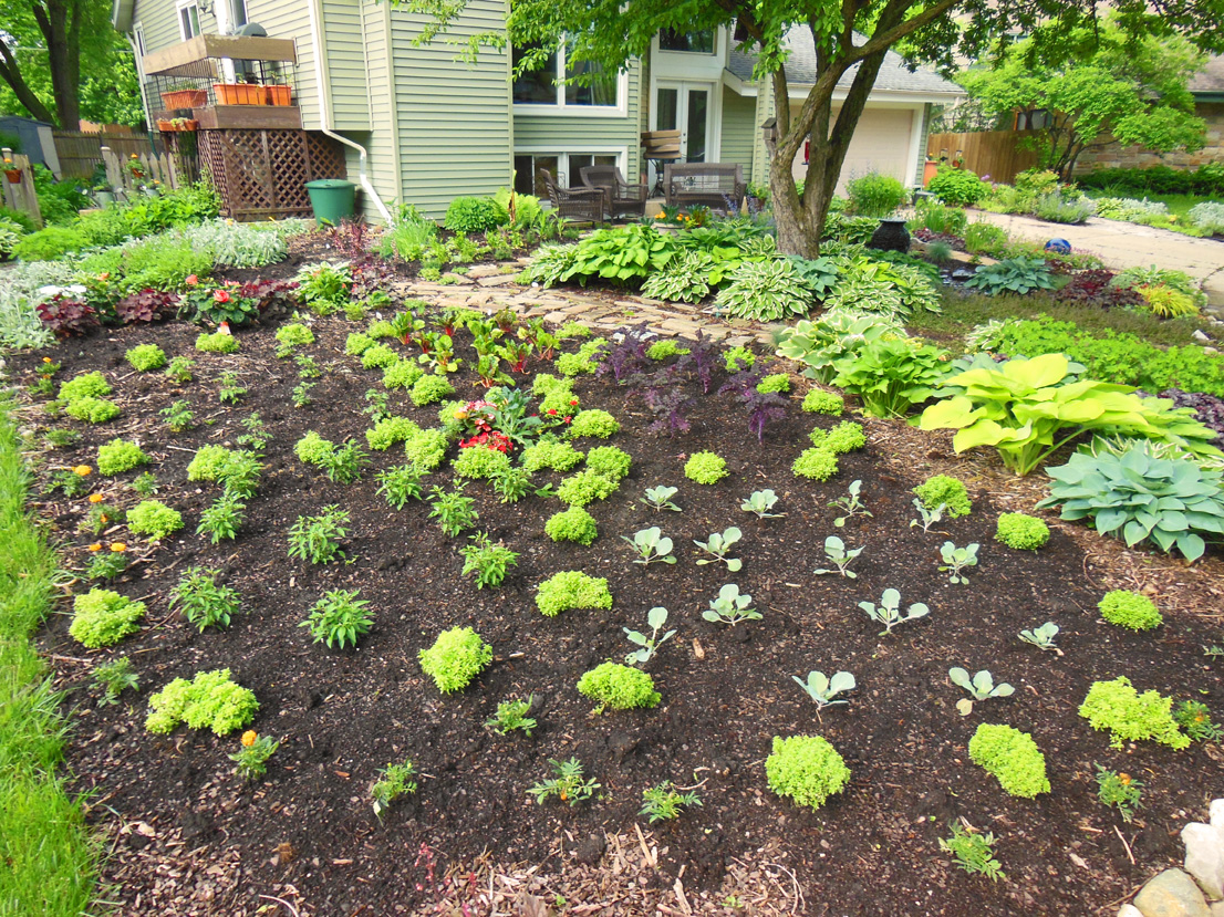 Front Lawn Vegetable Design   A Giant Flower Just Planted