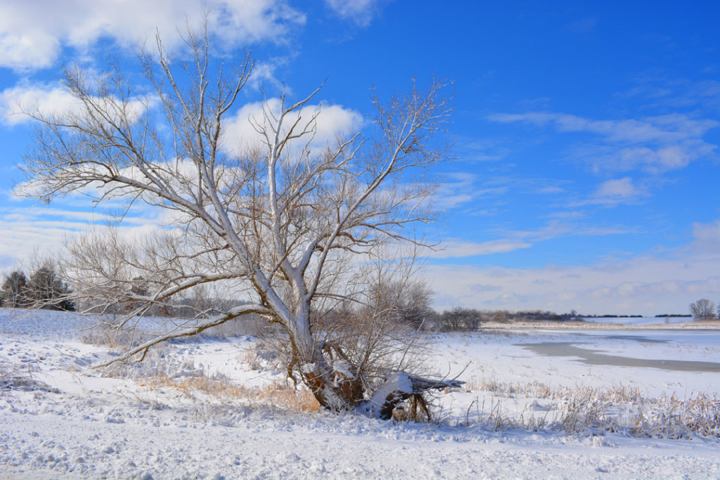 Snowy tree at frozen lake photo Fermilab
