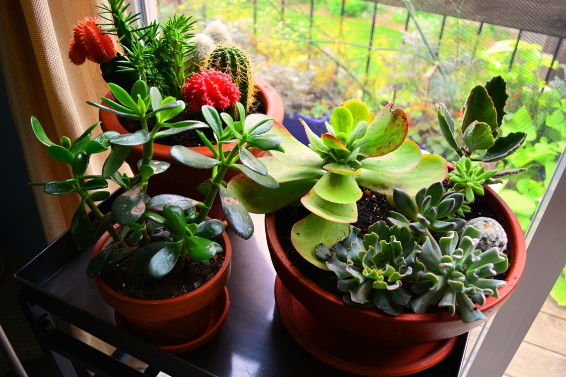 Houseplants part ii home air purification shawna coronado - Indoor houseplants ...