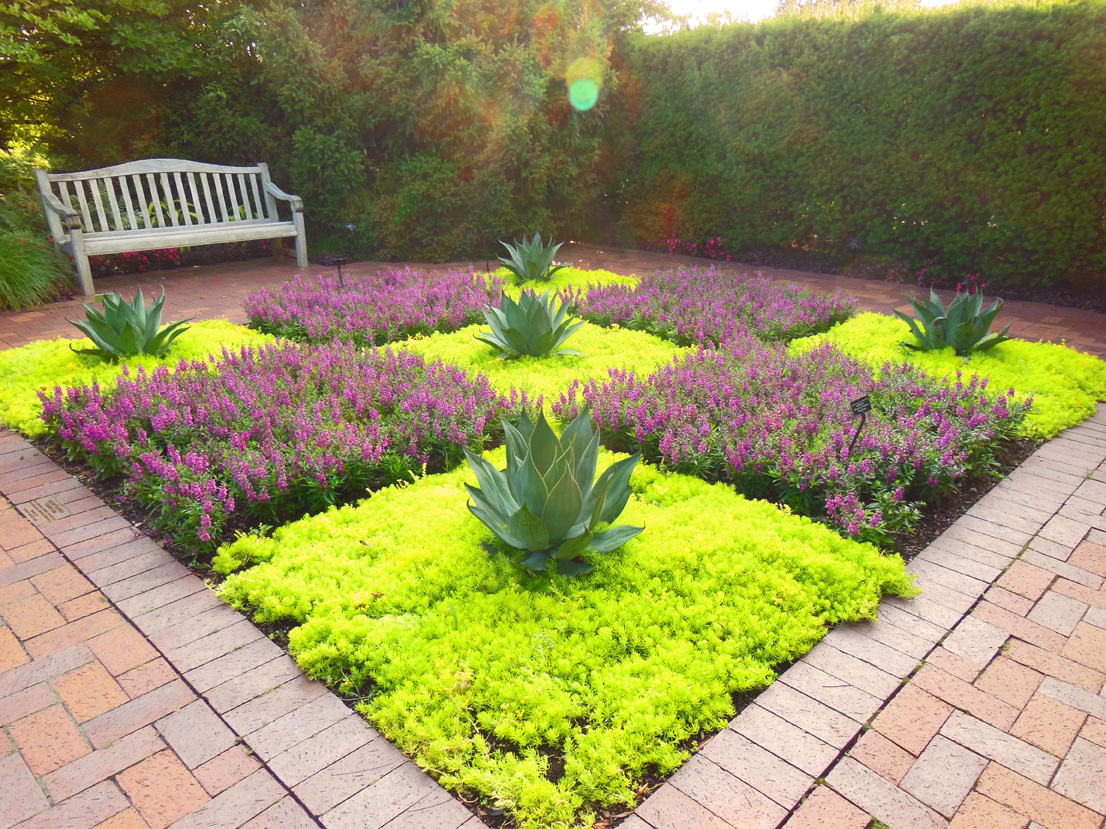 Garden with drought tolerant creeping sedum stonecrop for Landscaping plants