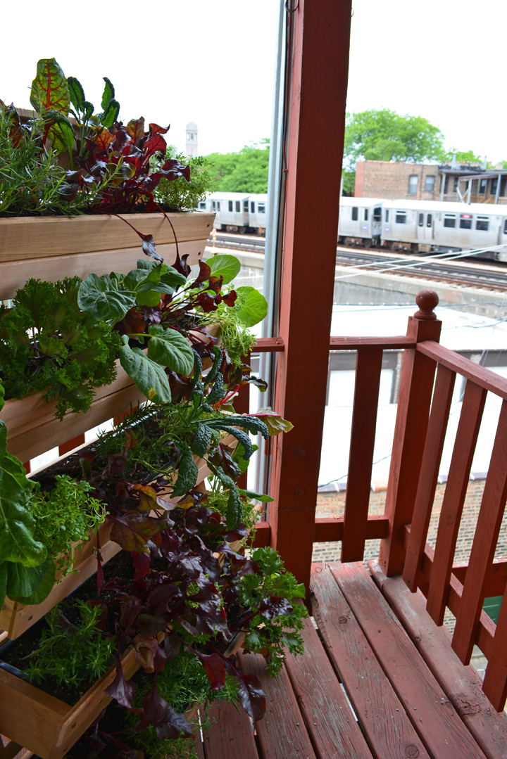 A living wall vegetable garden that stands alone shawna for Balcony vegetable garden