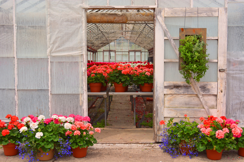 Aromatherapy Living Wall Grovert With Geraniums on Door