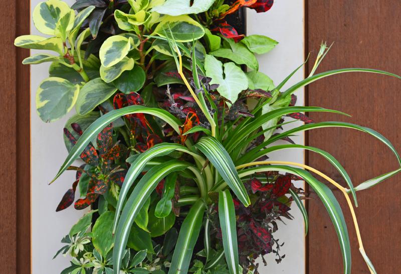 Home Office Living Wall Garden Growing