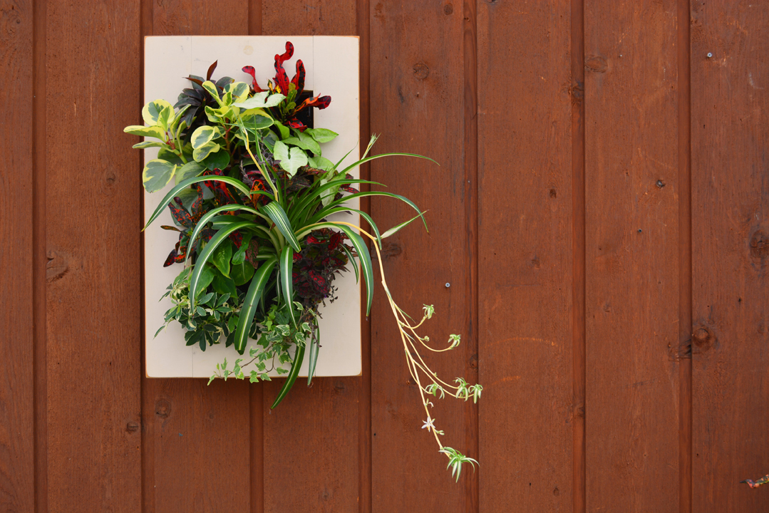 Home Office Living Wall with Houseplants