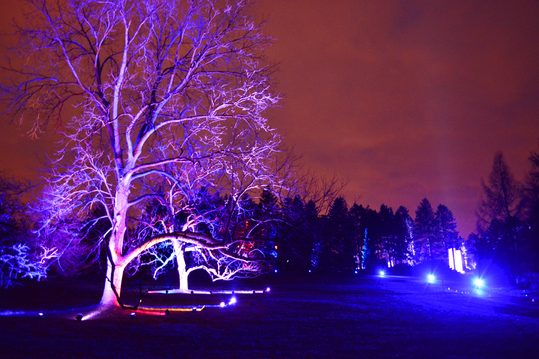 Holiday Tree Light Show at Morton Arboretum
