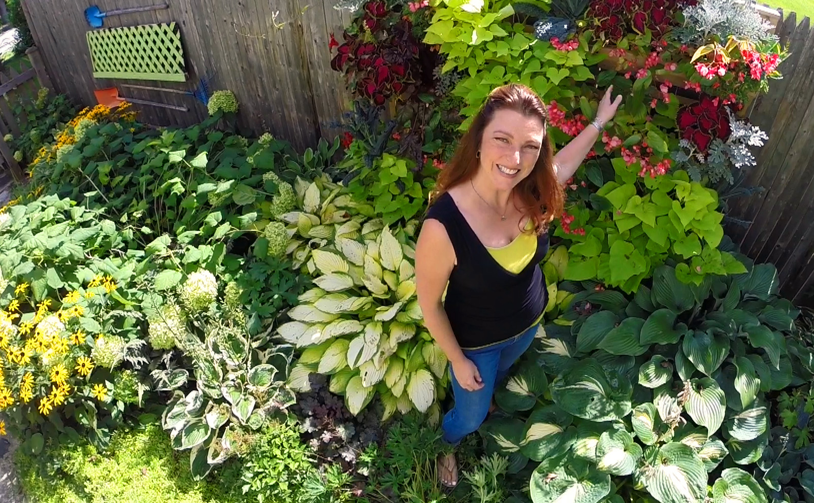 A Drone View of My Garden