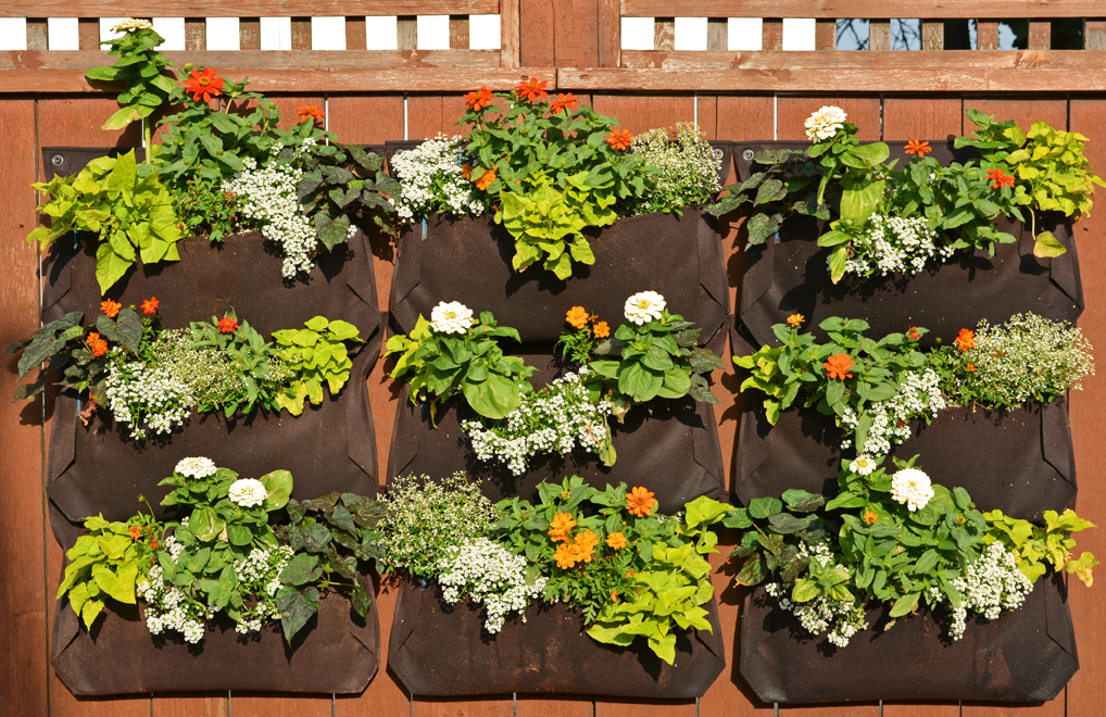 High Quality Woolly Pocket Orange And White LIving Wall Garden