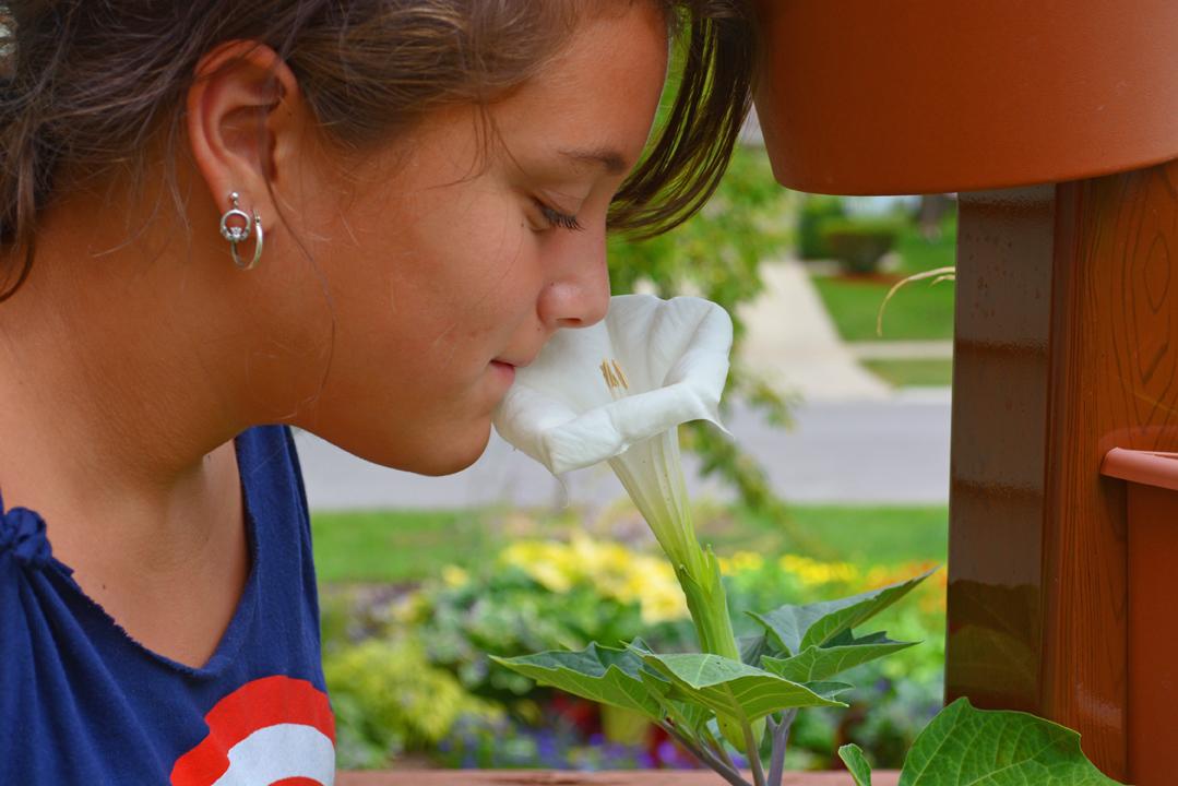 Garden Post Vertical Garden with Flowers