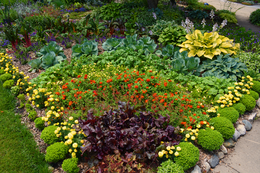 Perfect Rainbow Garden Design Organic Closeup Photo Images