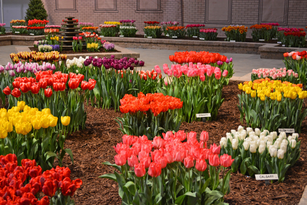 Tulips at the Chicago Flower and Garden Show