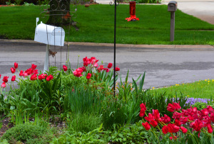 Hummingbird Feeder with Tulips