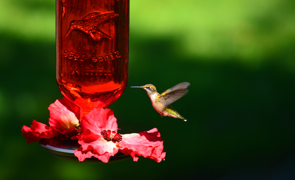 How To Make A Hummingbird Feeder At Home