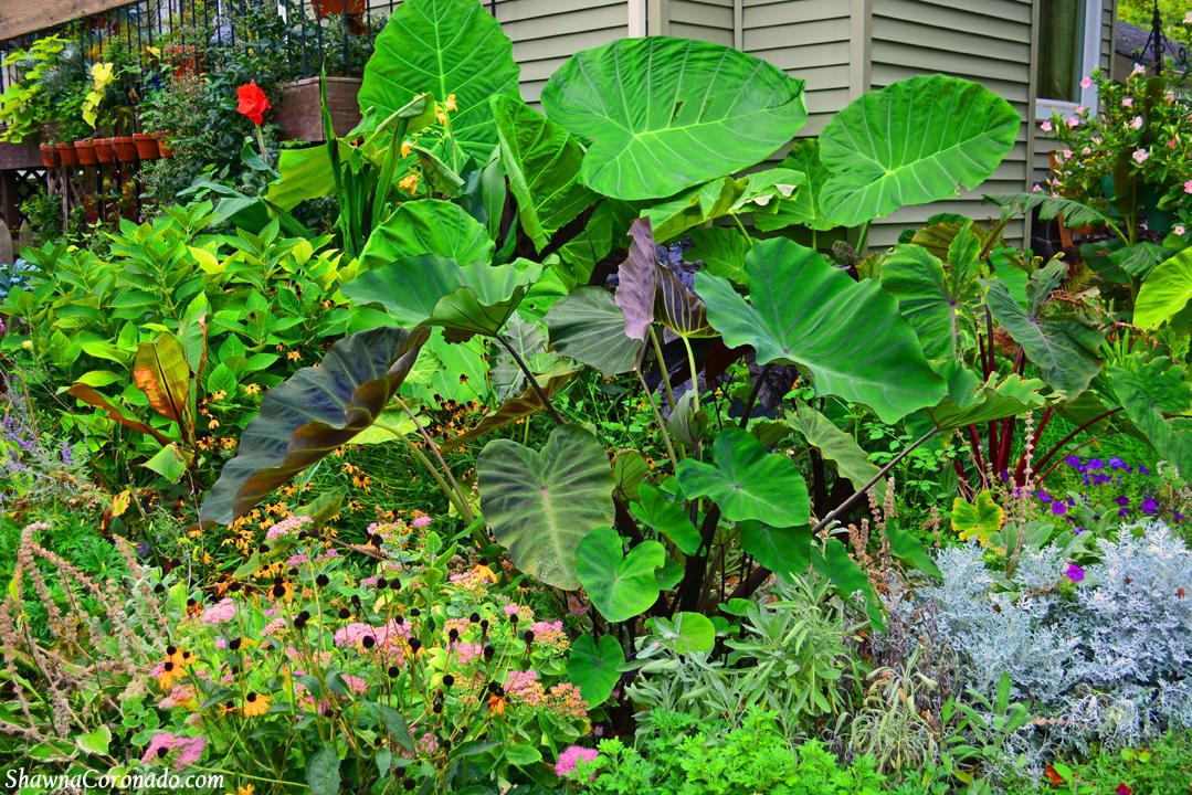 Tropical Jungle Garden with Colocasia