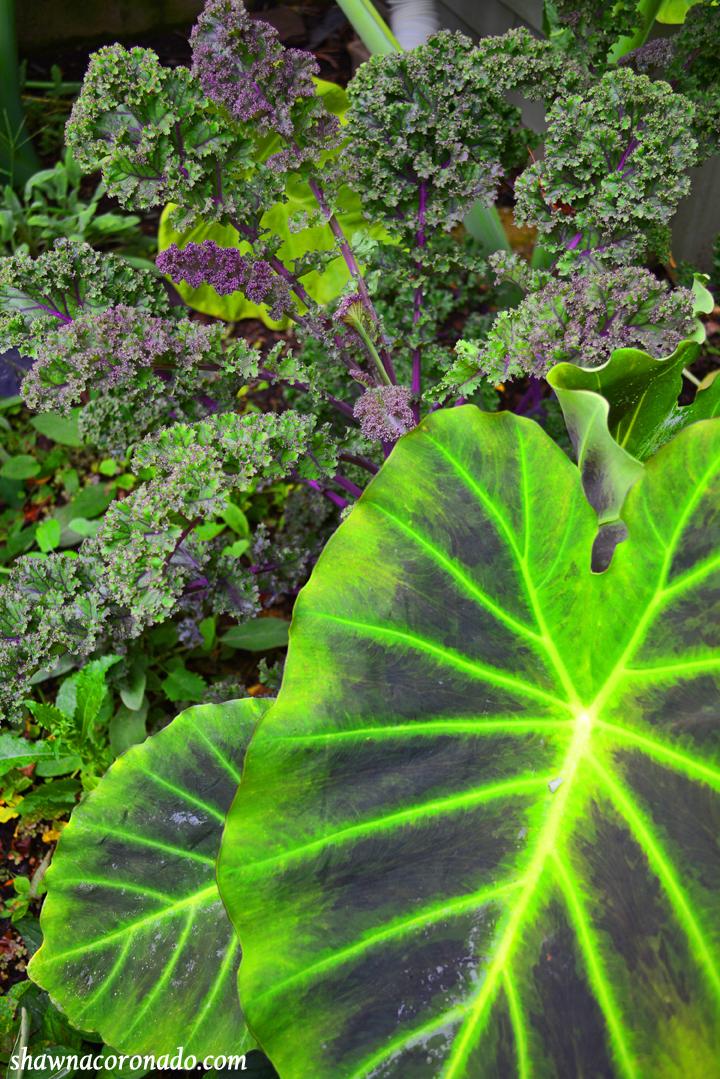 Tropical Jungle Garden with verbena and lobelia