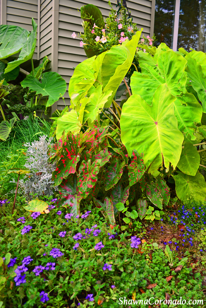 Tropical Jungle Garden with Purple Verbena and Lobelia