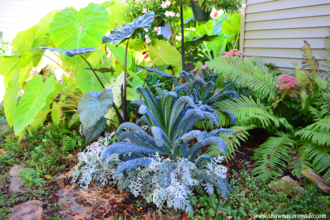 How to grow a tropical jungle garden shawna coronado for Plants for outdoor garden